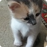 Adopt A Pet :: Jordyn - Richmond, VA