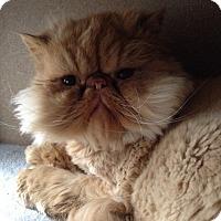 Adopt A Pet :: Bentley - Columbus, OH