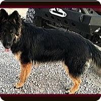 Adopt A Pet :: Lakota - Rancho Cucamonga, CA