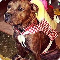 Adopt A Pet :: Brinda - Phoenix, AZ