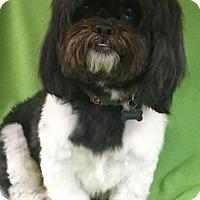 Adopt A Pet :: Napoleon - Alta Loma, CA