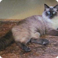 Adopt A Pet :: Loki - Westminster, MD