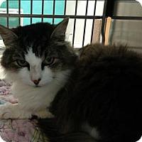 Adopt A Pet :: Ramona - Sherwood, OR