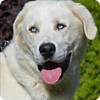 Adopt A Pet :: Cloud - Vernon, BC