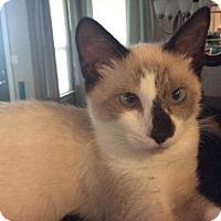 Adopt A Pet :: Tasmin. Female - Austin, TX