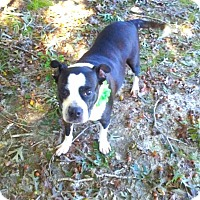 Terrier (Unknown Type, Medium) Mix Dog for adoption in Charlotte, North Carolina - LOLA