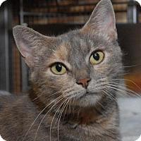 Adopt A Pet :: Darling - Jaffrey, NH