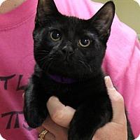 Adopt A Pet :: Jane - Kennesaw, GA