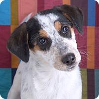 Adopt A Pet :: Rudy - Sudbury, MA