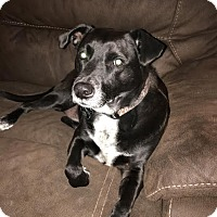 Adopt A Pet :: COOPER (COURTESY POST) - Phoenix, AZ