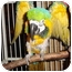 Photo 4 - Macaw for adoption in Vancouver, Washington - ROBERT