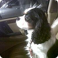 Adopt A Pet :: CHARLIE - 4 - Tacoma, WA
