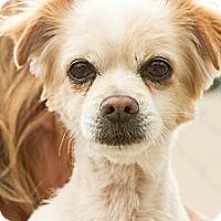 Adopt A Pet :: Rocky - Acton, CA