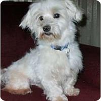 Adopt A Pet :: Lance - Mooy, AL