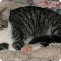 Adopt A Pet :: Eddie - Cincinnati, OH