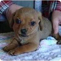 Adopt A Pet :: Maverick - Staunton, VA