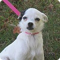 Adopt A Pet :: Aimee - Kittery, ME