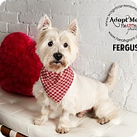 Adopt A Pet :: Fergus-adoption pending - Omaha, NE
