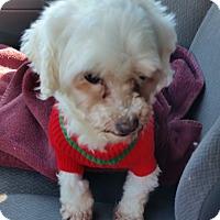 Adopt A Pet :: Breanna - Homer, NY