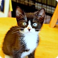 Adopt A Pet :: Pongo - Island Park, NY
