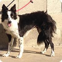 Adopt A Pet :: HOLLIE - San Pedro, CA