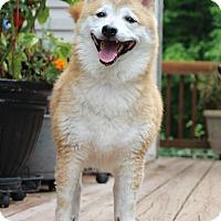 Adopt A Pet :: Kimora - Manassas, VA