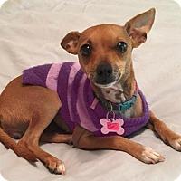 Adopt A Pet :: Eyelashes - Phoenix, AZ