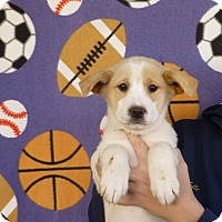 Adopt A Pet :: Taurus - Oviedo, FL
