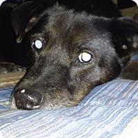 Adopt A Pet :: Duke - New Port Richey, FL