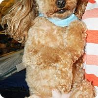 Adopt A Pet :: Frankie - Umatilla, FL