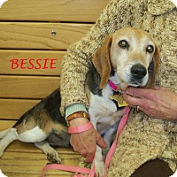 Adopt A Pet :: BESSIE - Ventnor City, NJ