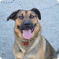 Adopt A Pet :: Gunther - Lafayette, IN