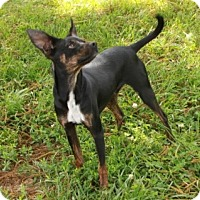Adopt A Pet :: Radar - Spring Valley, NY