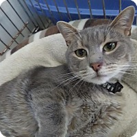 Adopt A Pet :: FOGGY - Owenboro, KY