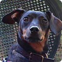 Adopt A Pet :: ZOEY - Portland, OR