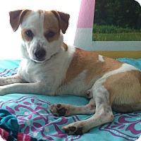 Adopt A Pet :: Charlie in San Antonio - Austin, TX
