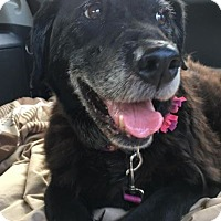 Adopt A Pet :: Maddie - Huntley, IL