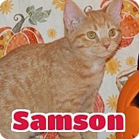 Adopt A Pet :: #131 Samson - Lawrenceburg, KY