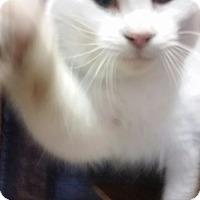 Adopt A Pet :: ROMEO - Ocala, FL