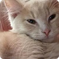 Adopt A Pet :: Spooky - Covington, KY