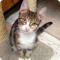 Adopt A Pet :: Catrina - River Edge, NJ