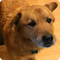Adopt A Pet :: Jonah - Aurora, IL