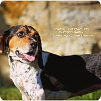 Adopt A Pet :: Violet - Cincinnati, OH