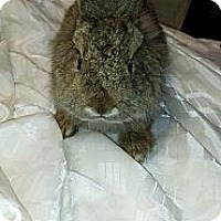 Adopt A Pet :: Fuzzy Wuzzy - Conshohocken, PA
