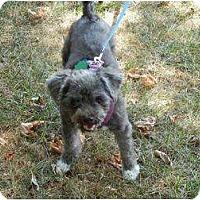 Adopt A Pet :: Ubu - Seymour, CT