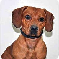 Adopt A Pet :: Oscar - Port Washington, NY