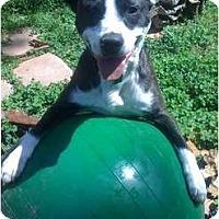 Adopt A Pet :: Petey - Memphis, TN