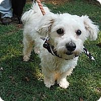 Adopt A Pet :: Maxwell - Adamsville, TN