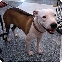Adopt A Pet :: Baby Girl - Phoenix, AZ