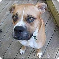 Adopt A Pet :: Biscuit - Savannah, GA
